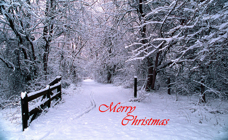 snowy trail merry christmas photograph by skip willits