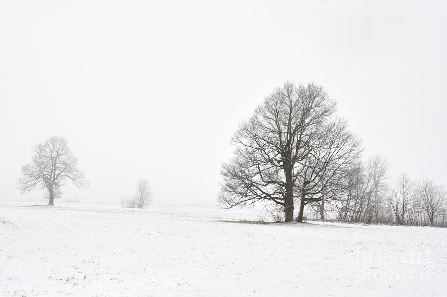 Snowy Winter Landscape With Trees Photograph