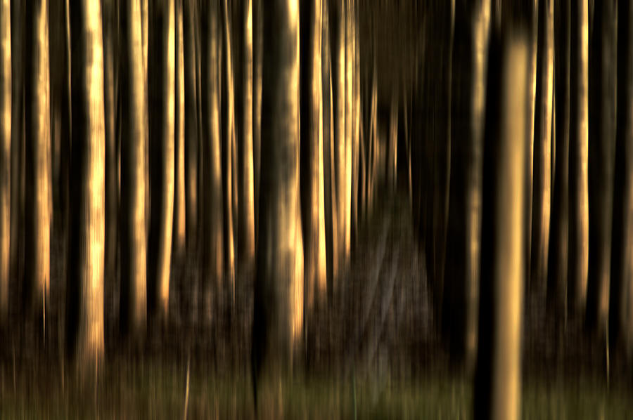 Trees Photograph - So Many Souls by Terrie Taylor