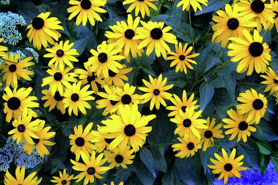 Flowers Photograph - So Prettty by Ed Golden