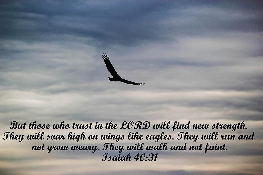 Soar Like Eagles Photograph By Isaac Chua