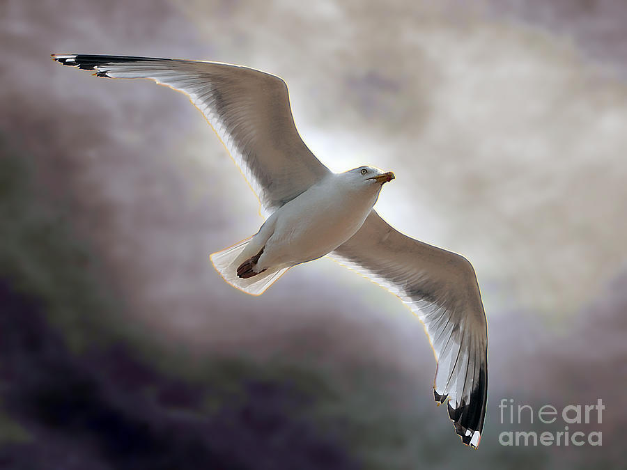 Seagull Photograph - Soaring by Graham Taylor
