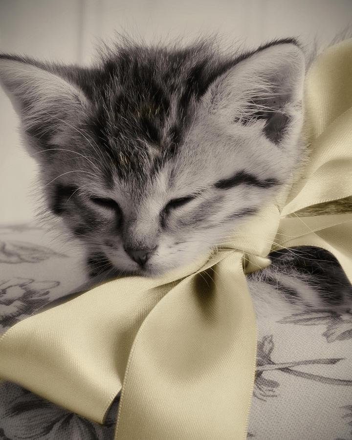 Kitten Photograph - Soft by Amy Tyler