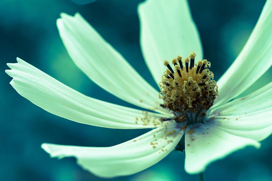 Blooming Flower Photograph - Soft Color by Daniel Kulinski