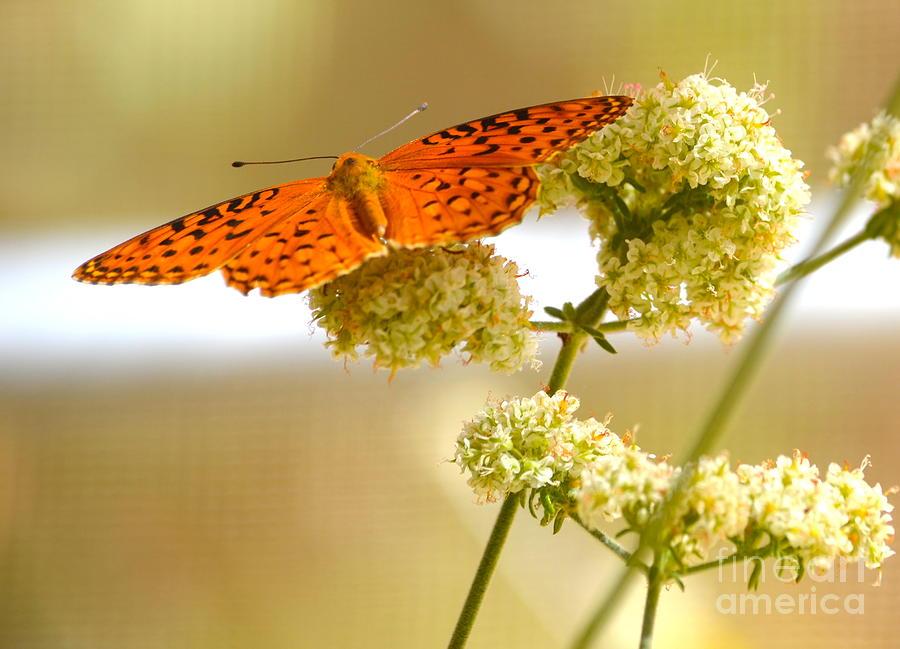 Butterfly Photograph - Soft by Johanne Peale