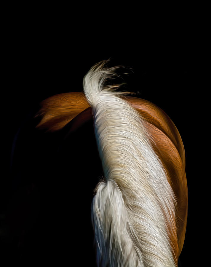 Horse Photograph - Soft N Silky by Gary Smith