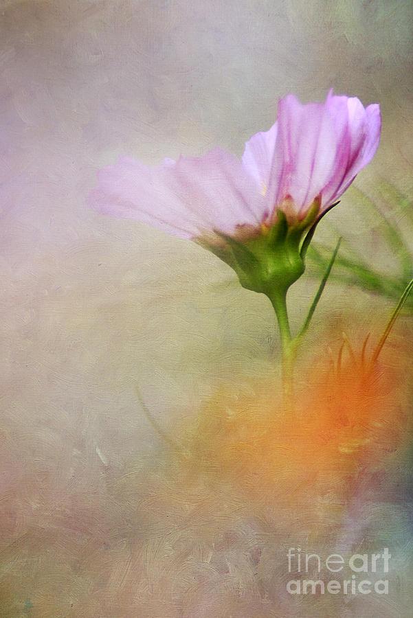 Autumn Photograph - Soft Pastels by Darren Fisher