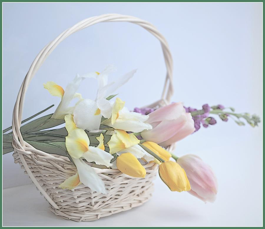 Horizontal Photograph - Softness by This Wonderful Life
