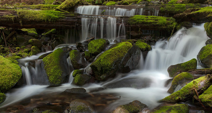 Olympic National Park Photograph - Sol Duc Stream by Mike Reid