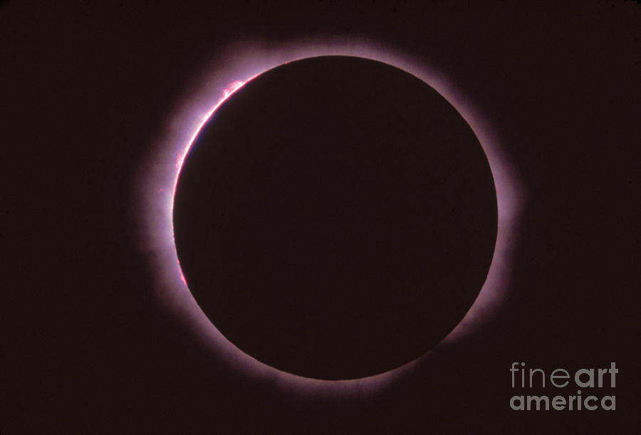 Solar Eclipse Photograph - Solar Prominence And Chromosphere by Science Source