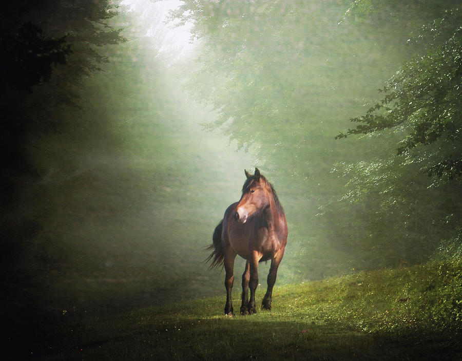 Horizontal Photograph - Solitary Horse by Christiana Stawski