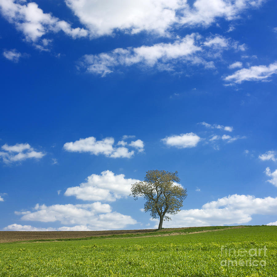 Trees Photograph - Solitary Tree In Green Meadow by Bernard Jaubert
