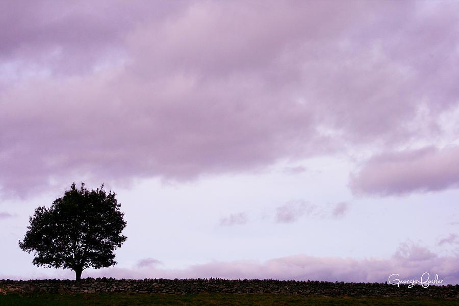 Tree Photograph - Solitude - Denbigh Moors by Georgia Fowler