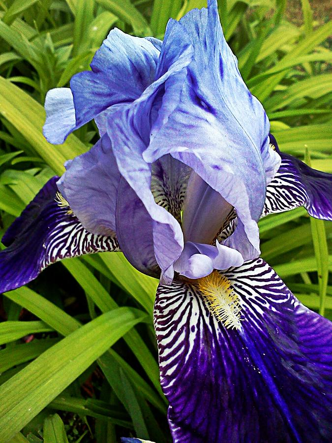 Iris Photograph - Solo Appearance by Kevin D Davis