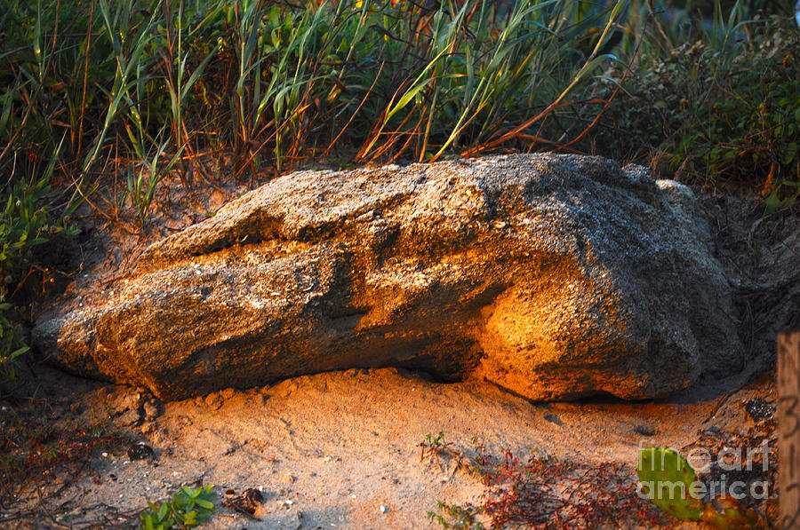 Rock Photograph - Something Is Hiding Under There by Laura Ogrodnik
