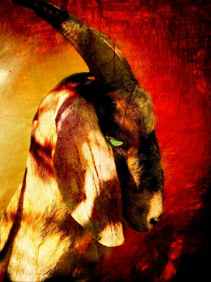 Goat Photograph - Son Of Perdition by Leah Moore