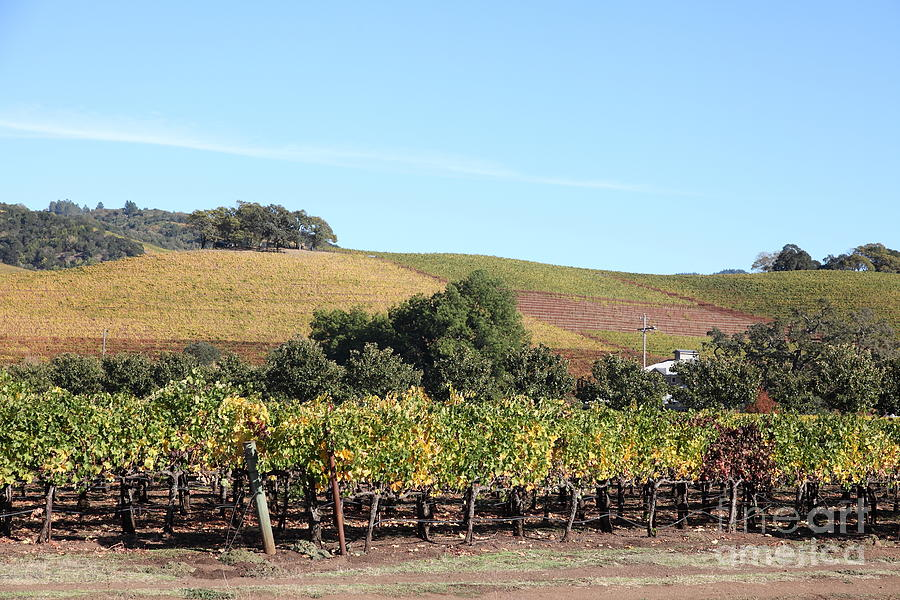 Sonoma Photograph - Sonoma Vineyards - Sonoma California - 5d19307 by Wingsdomain Art and Photography