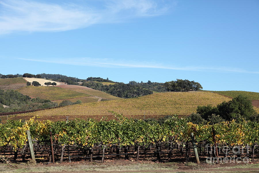 Sonoma Photograph - Sonoma Vineyards - Sonoma California - 5d19309 by Wingsdomain Art and Photography