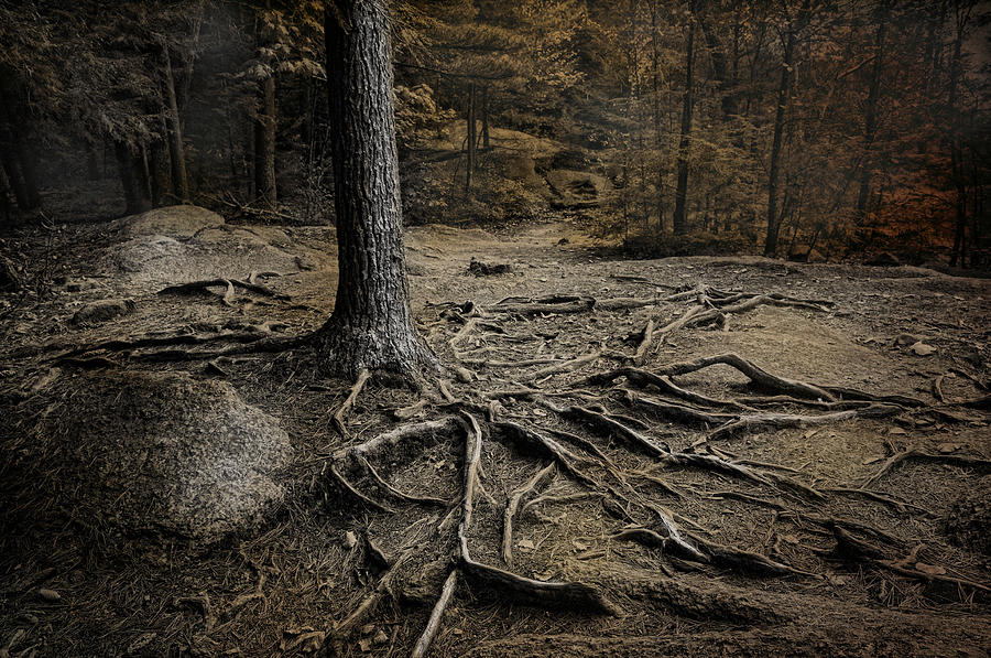 Roots Photograph - Soul Searching by Robin-Lee Vieira