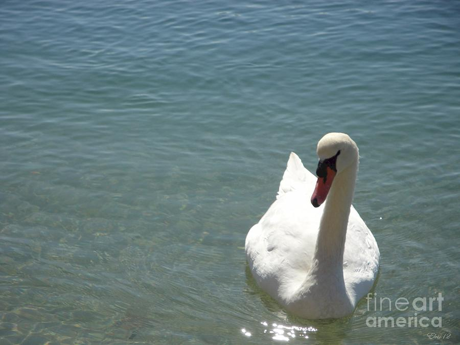 Swan Photograph - Soulmate One by Laurence Oliver