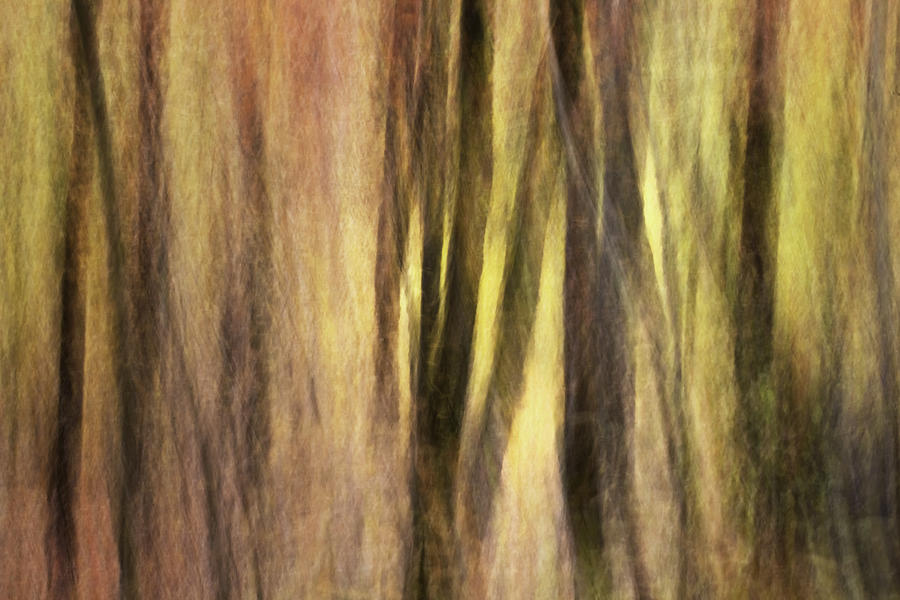 Kinetic Photograph - Sourwoods In Autumn Abstract by Rob Travis