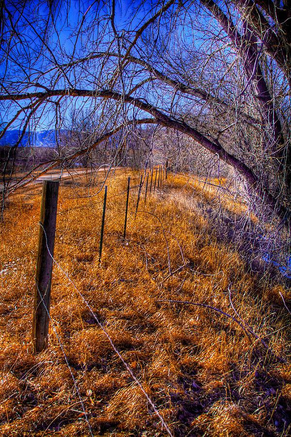 Denver Photograph - South Platte Fenceline by David Patterson