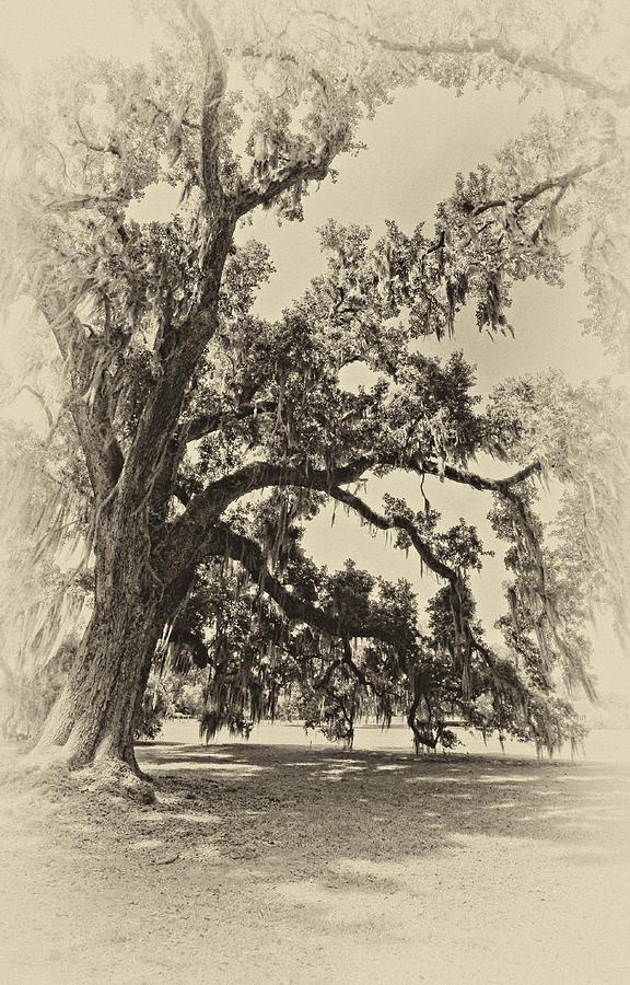 Evergreen Plantation Photograph - Southern Comfort Sepia by Steve Harrington