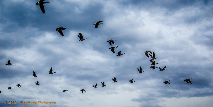 Geese Photograph - Southern Destination by Dan Crosby