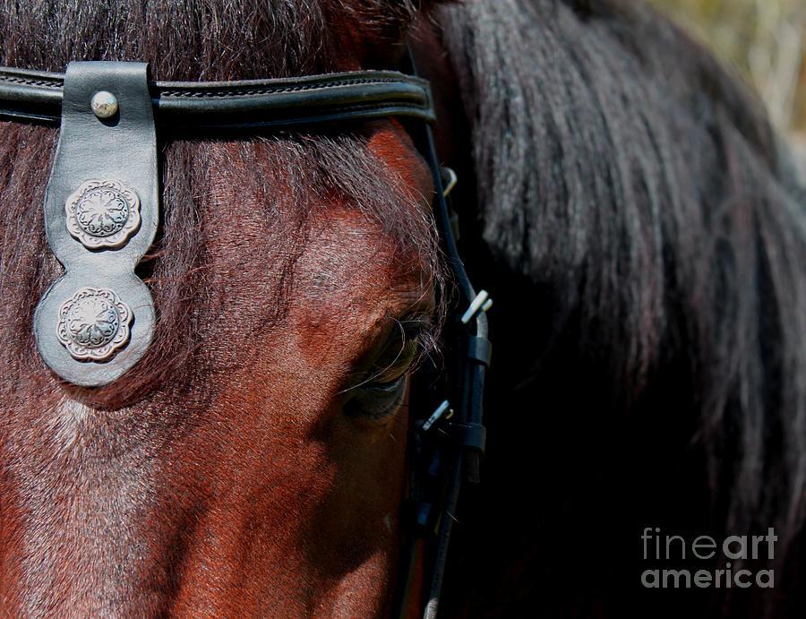 Spanish Horse Photograph - Spanish Horse by Christean Ramage