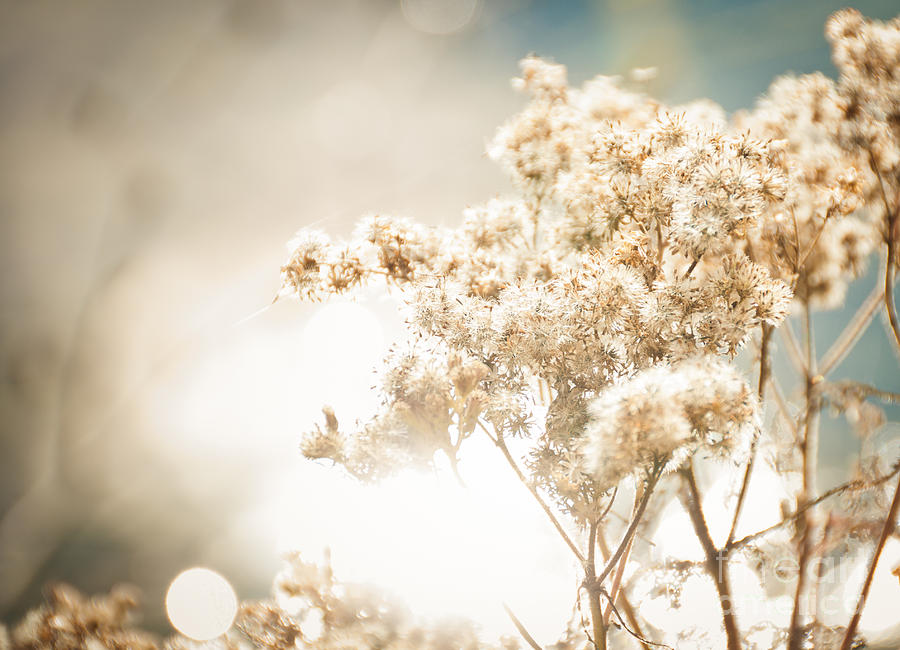Landscape Photograph - Sparkly Weeds by Cheryl Baxter