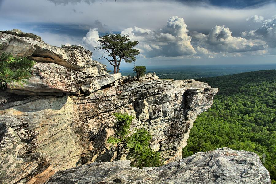 Hanging Rock State Park Photograph - Sparse Vegetation by Adam Jewell