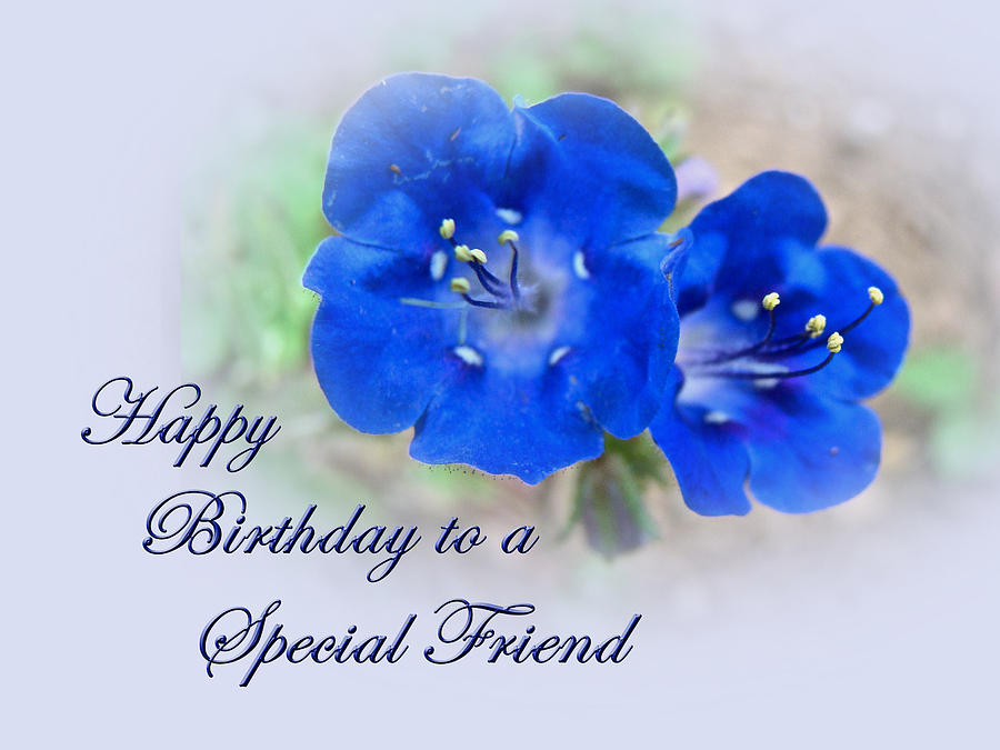 special friend birthday card  blue floral photograph by mother nature, Birthday card