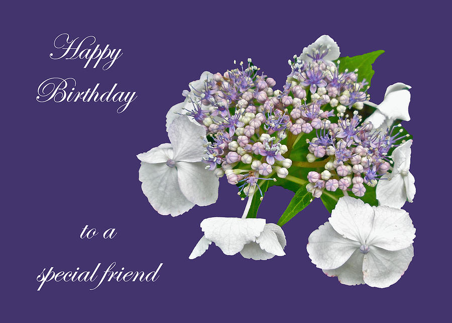 Special Friend Birthday Card Blue Lace Cap Hydrangea Photograph By