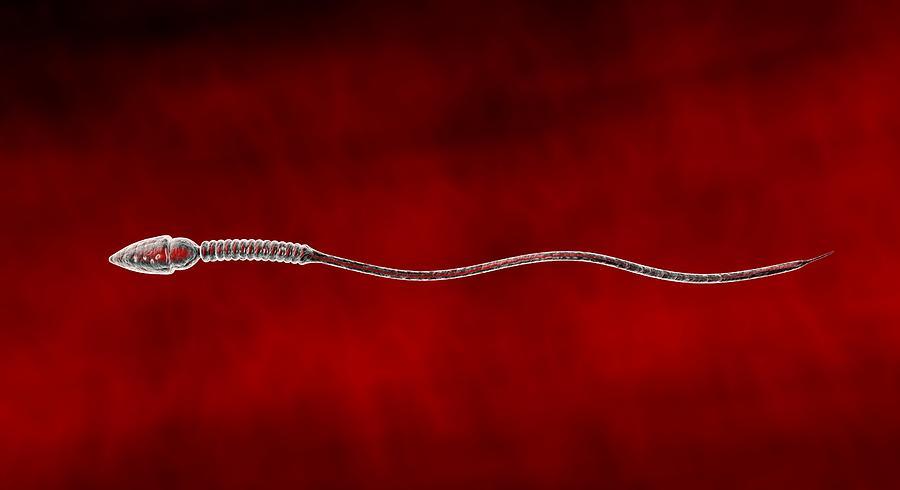 Spermatozoon Photograph - Sperm Cell by Jose Antonio PeÑas