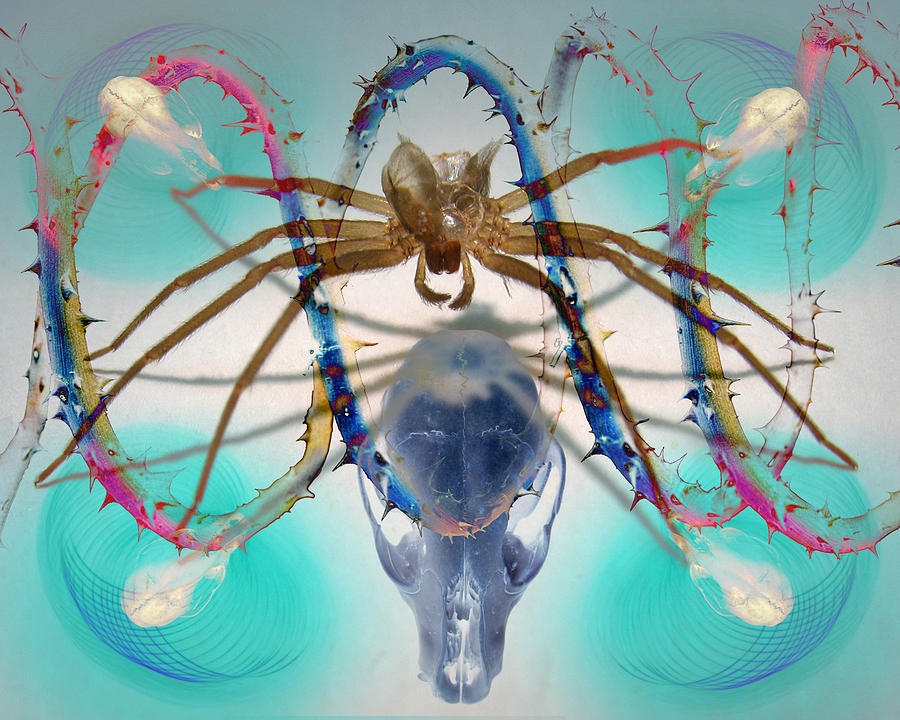 Digital Photograph - Spider Dna by Adam Long