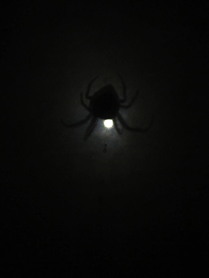 Spider Photograph - Spider In The Moonlight by Kym Backland