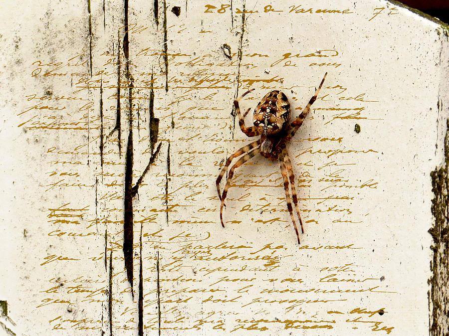 Spider Photograph - Spider Letter by Yvon van der Wijk