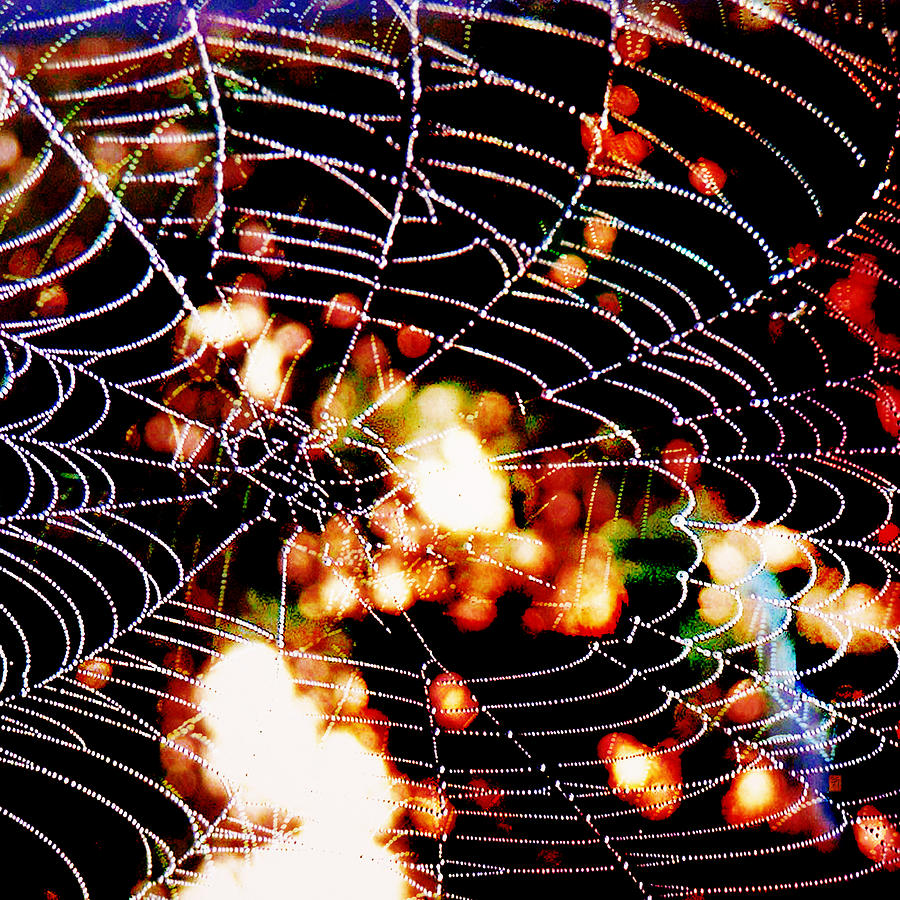 Garden Digital Art - Spider Love by Greta Thorsdottir