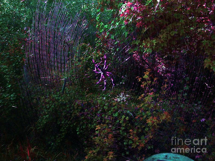 Spider Photograph - Spider Web In The Magic Forest by George Pedro