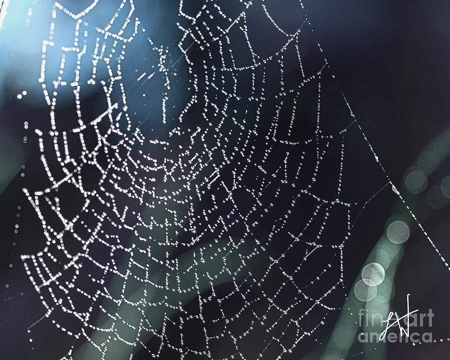 Spiderweb Photograph - Spiderweb Blues by Artist and Photographer Laura Wrede