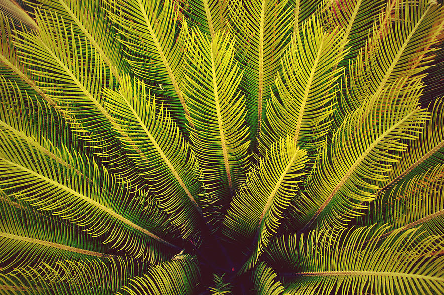 Leaves Photograph - Spiked Leaves by Sumit Mehndiratta