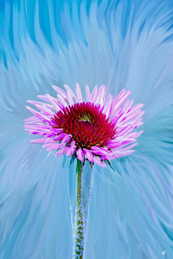 Flowers Photograph - Spin Me by Linda Sannuti