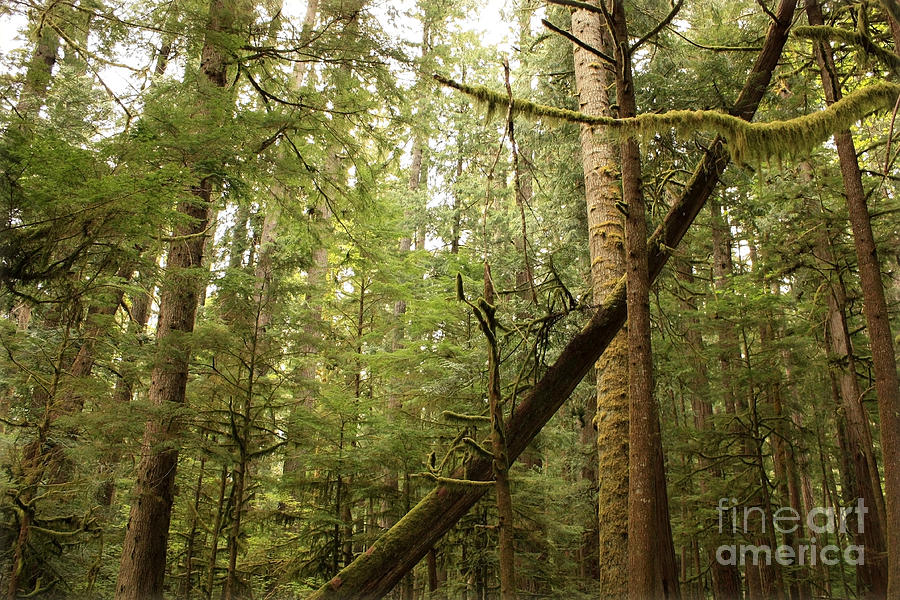 Washington State Photograph - Spirit Of The Pacific Northwest by Carol Groenen