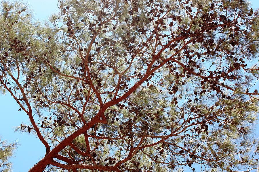 Spirit Of The Tree Photograph by Cigdem Cigdem