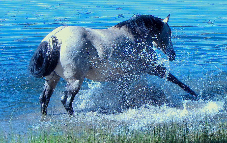 Horses Photograph - Splashing Horse by FeVa  Fotos