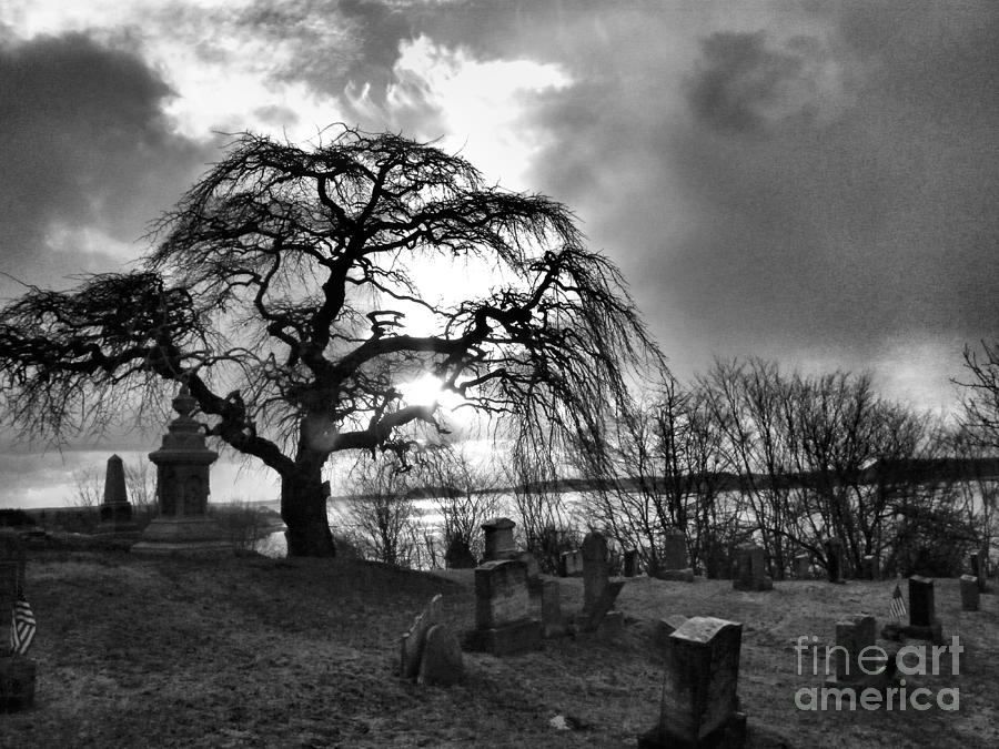 spooky tree photograph by alicia sprowl