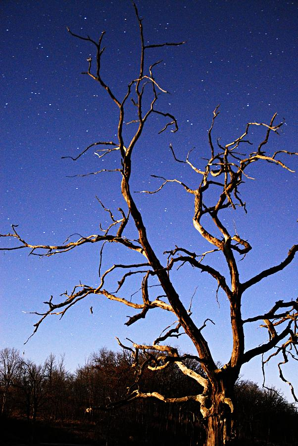 Nature Photograph - Spooky Tree by Larry Ricker
