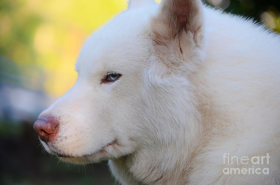 White Dog Photograph - Spot by Lynda Dawson-Youngclaus
