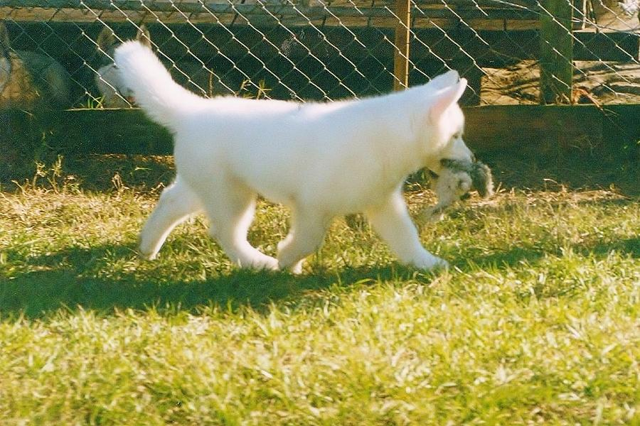 White Photograph - Spot Trot by Lynda Dawson-Youngclaus