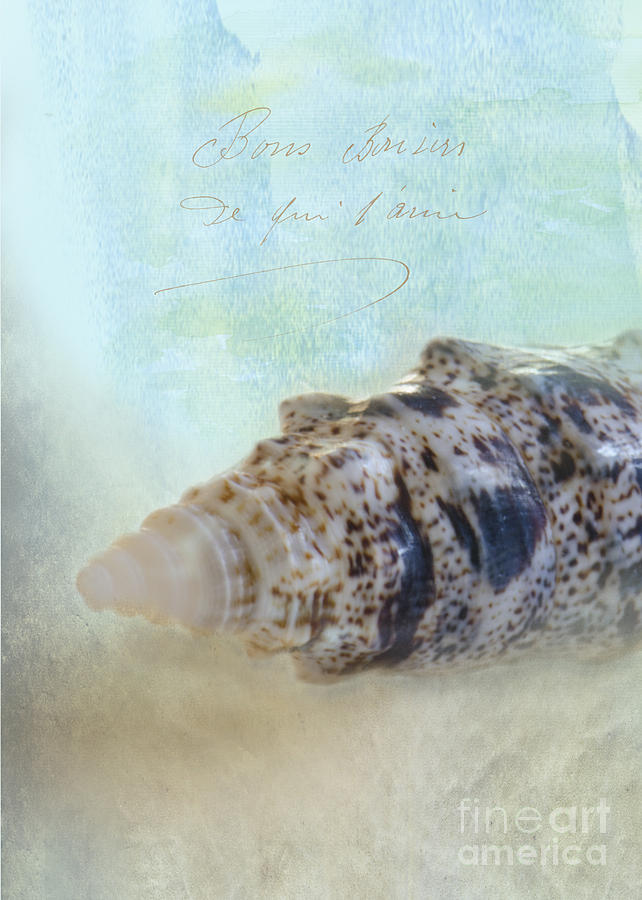 Sea Shell Photograph - Spotted Auger Seashell by Betty LaRue